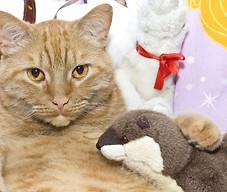 Kot i zabawka