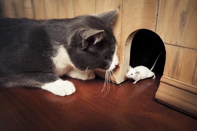 Prezenty Od Kota Zachowania Artykuły świat Kotów