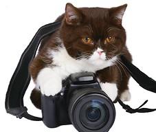 Kot z aparatem