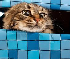Kot to nie prezent