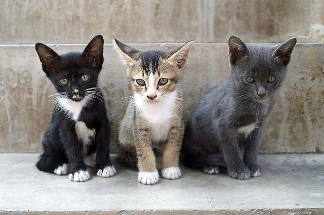 Kot Idealny Czyli Jak Wybrać Zwierzę Dla Siebie Pomoc Artykuły