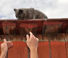 Pomóc kotu