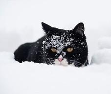 Kot zimą